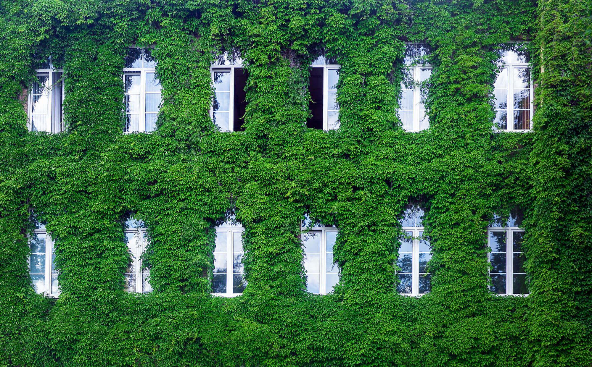 Eine Maßnahme von vielen: Fassadenbegrünungen können zu einem angenehmeren Mikroklima beitragen.