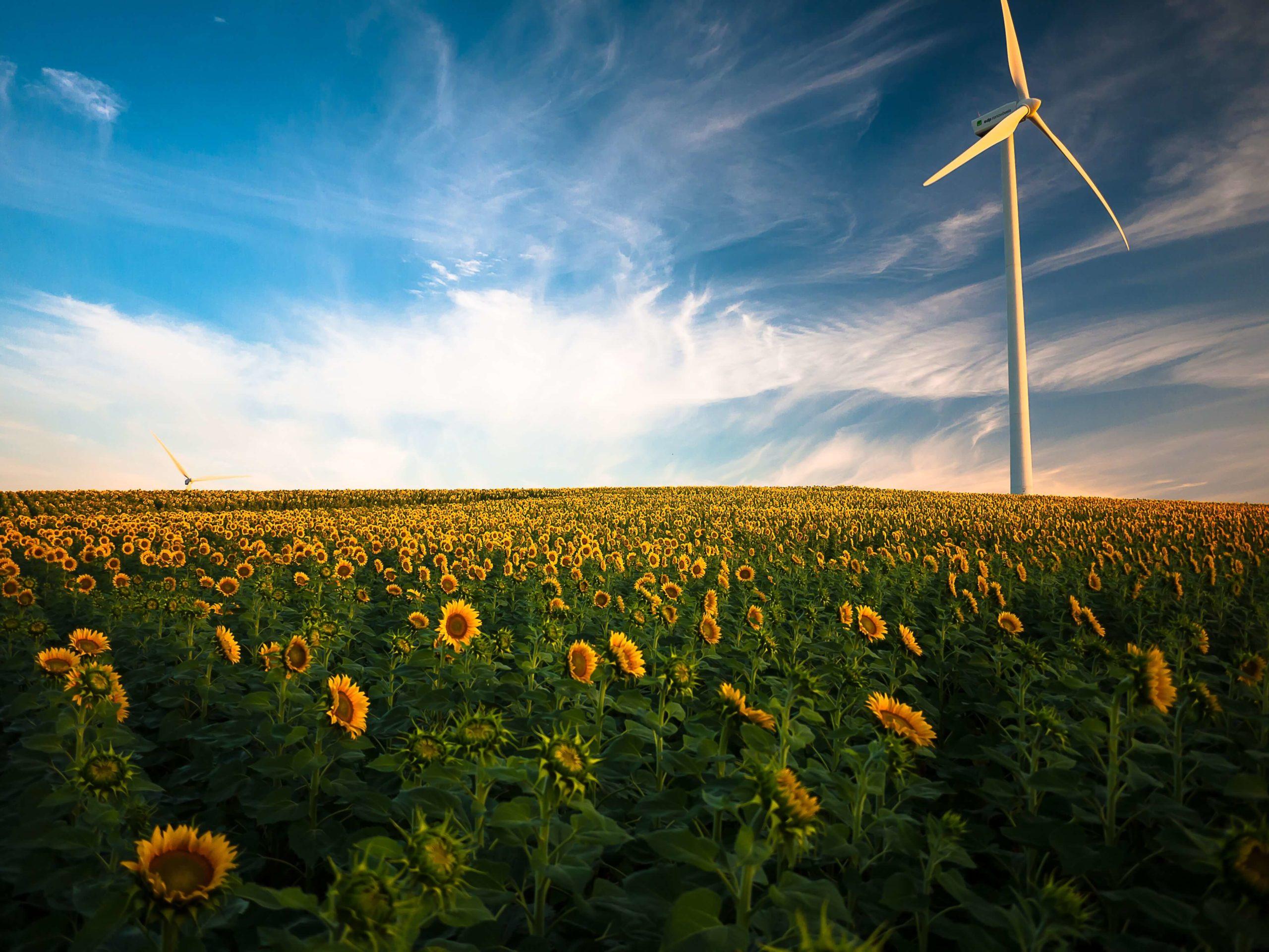 Windrad und Sonnenblumen