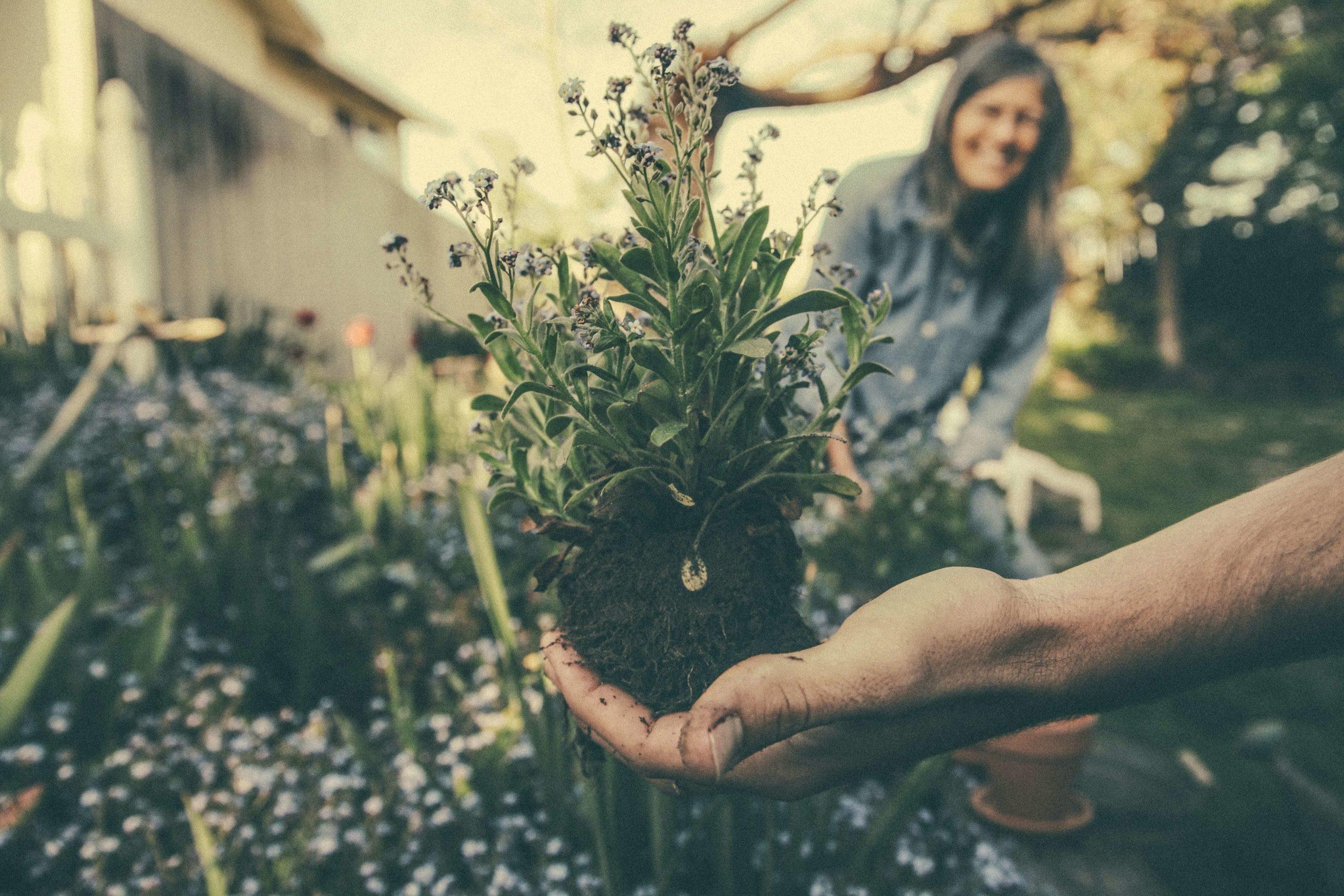 Pflanzen und Hand