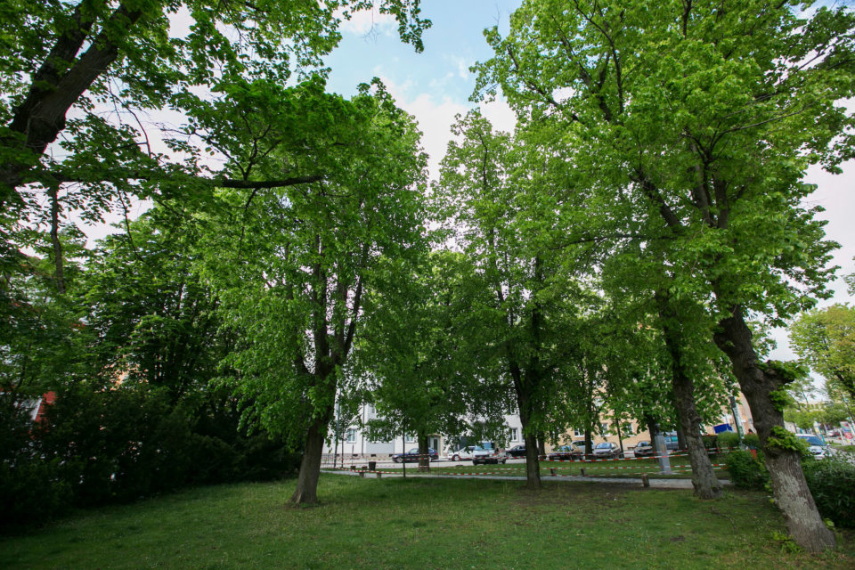 Was heute kaum genutzt wird, soll in den kommenden Jahren zu einer Kühl- und Naherholungszone für die St. Pöltener Innenstadt werden.
