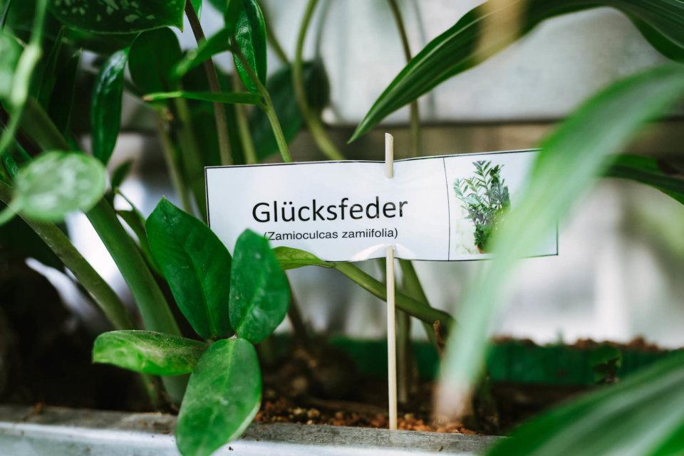 In die mit Tonsubstrat gefüllten Tröge wurden zahlreiche unterschiedliche Pflanzenarten gesetzt.