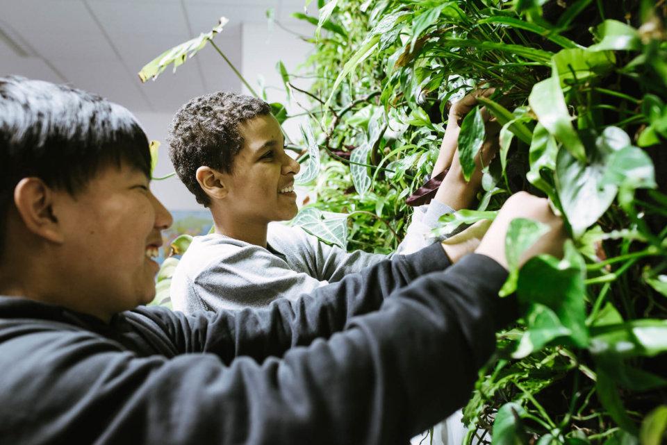 Geringer Pflegeaufwand: Die Pflanzen brauchen nur wenig Betreuung. Im Bild entfernen zwei Schüler verwelkte Blätter.