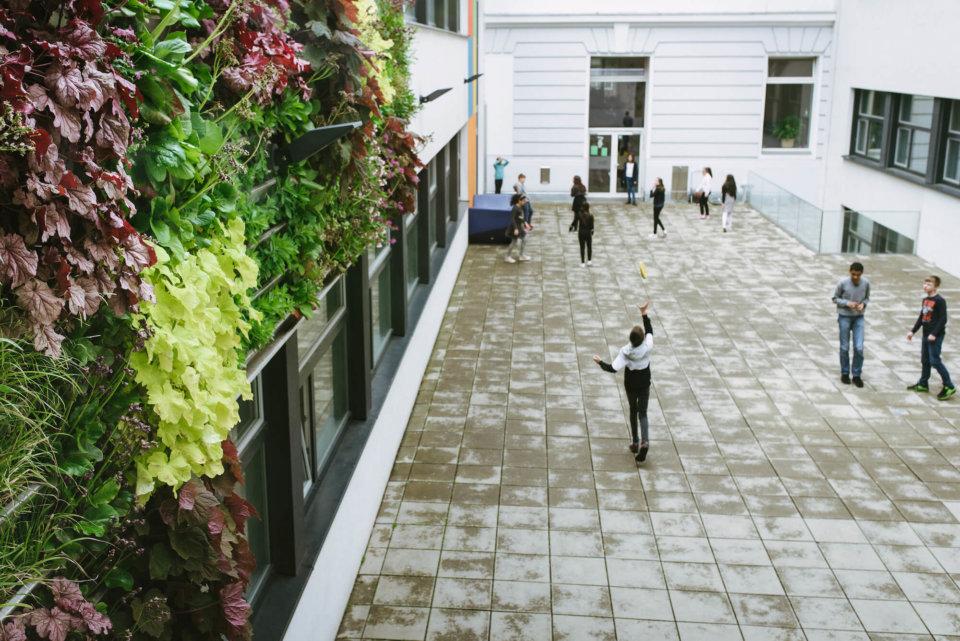 Auch im Innenhof des BRG 16 wurde ein grünes Fassadenelement angebracht, bald soll hier auch ein Hochbeet mit Sitzgelegenheiten errichtet werden.